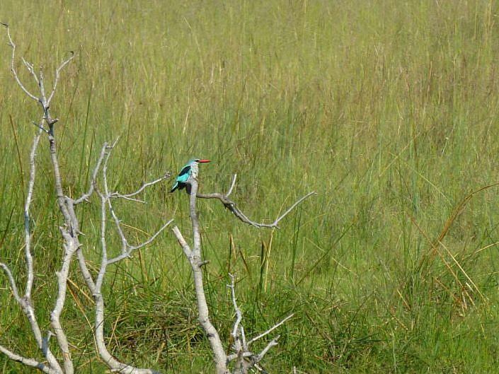 Wunderschöne Vogelwelt im Okavango Delta.
