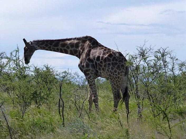 Etosha Park Namibia.